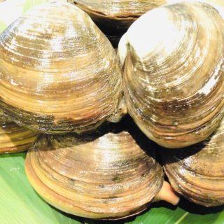 源喜屋:北海道産ホッキ貝のお刺身を特別価格でご提供☆彡